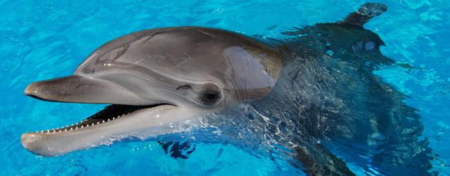 звуки дельфинов