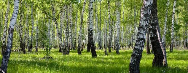 звук леса