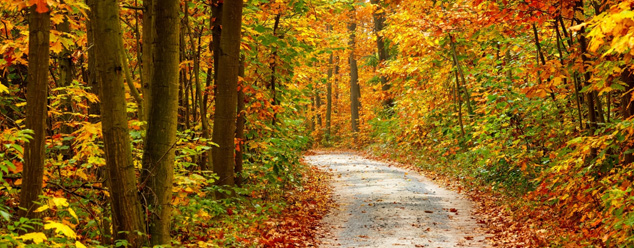 Звуки осеннего леса