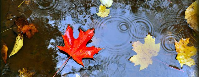 Звуки осеннего дождя
