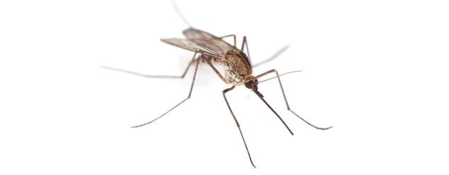 Звук комара