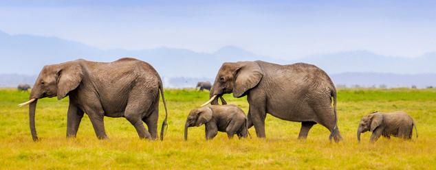 Звук слона