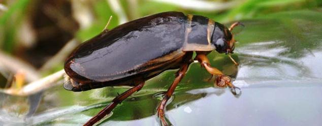 Звук жука