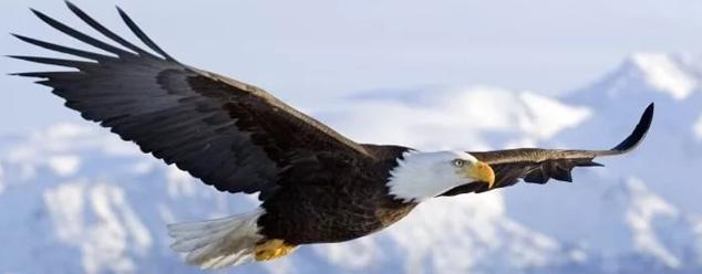 Крик орла