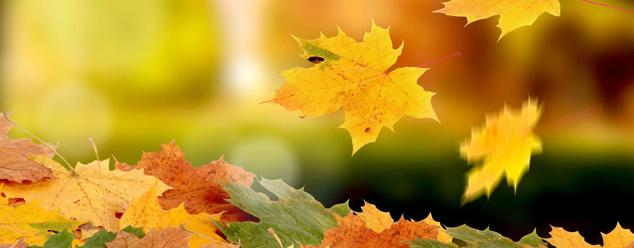 Осенние звуки