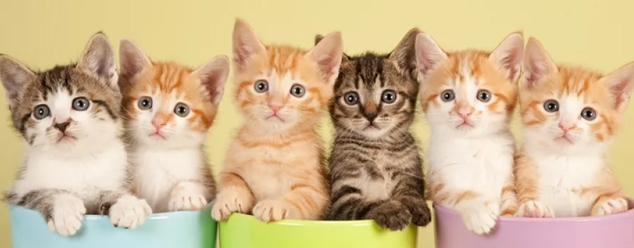Звуки котят