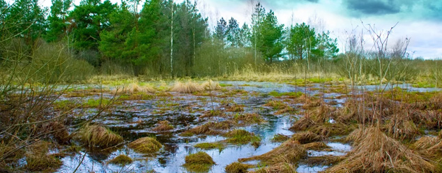 Звуки болота