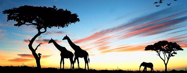 Звуки Африки